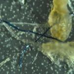 Bilder på partiklar från Landsortsdjupet